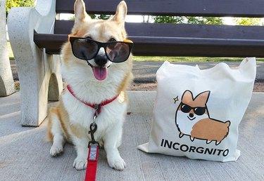 Corgi wearing sunglasses next to tote bag with drawing of corgi wearing sunglasses