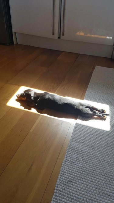Puppy in rectangle of sunshine