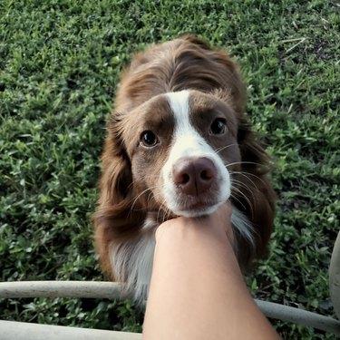Dog looking up lovingly