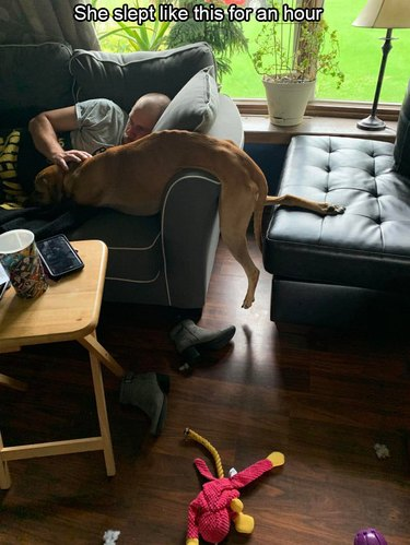 Dog sleeping draped over couch arm