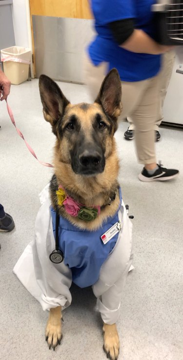 Dog in scrubs and lab coat