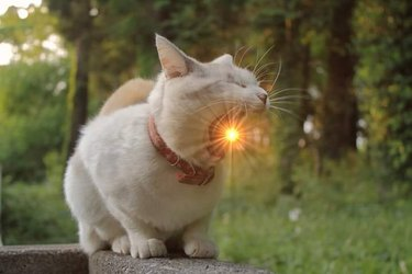 """cat appears to """"eat"""" the sun"""