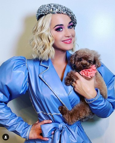 Katy Perry and dog