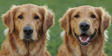 26 dogs with better LinkedIn profile pictures than you