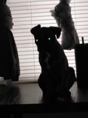 dog in shadows