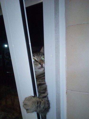 cat tries to open door