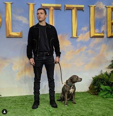 Tom Holland and dog