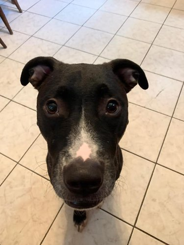 dog head without dog body