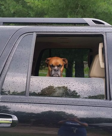 Frowning dog looking out the window of a rained on car.