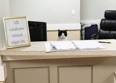 "Cat sitting behind a reception desk with a sign that says ""All visitors must sign in."""