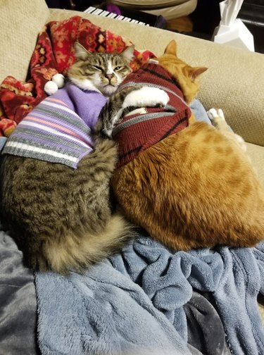 Two cats in sweaters cuddling