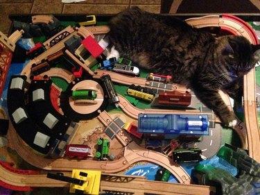 Cat laying on miniature railroad tracks.