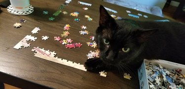 Cat sitting on puzzle.