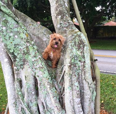 Dogs in trees are the real branch managers