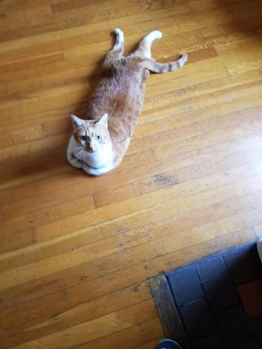 Silly cat poses guaranteed to make you LOL