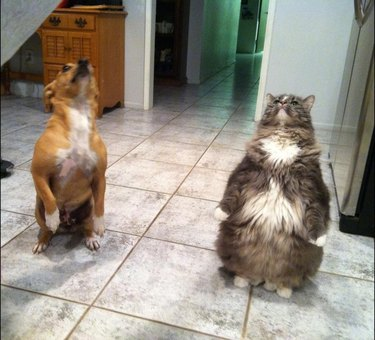 Dogs standing up