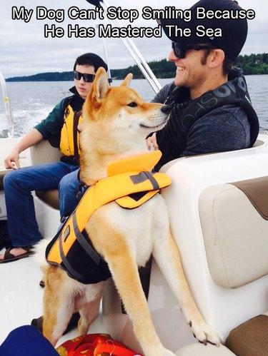 Shiba Inu on a boat.