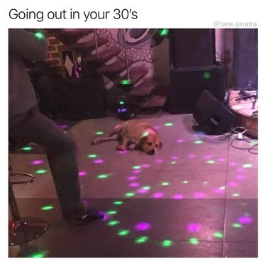 Dog laying on the floor in the middle of a party.