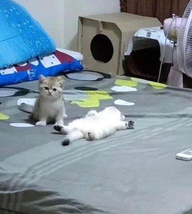 kitten sits next to second kitten