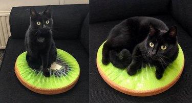 black cat on pillow that looks like a kiwi