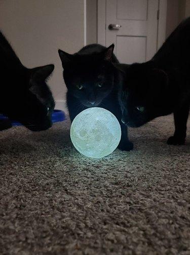 black cats gather around moon orb