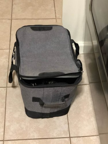 black cat hidden in suitcase