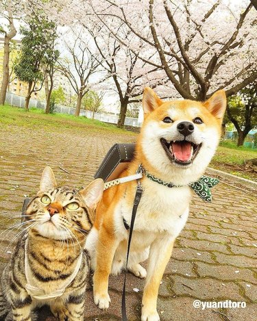 Dog and cat wearing backpacks.