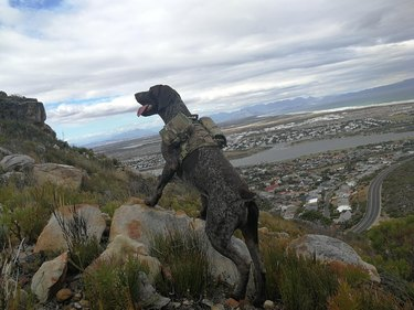 Dog wearing a backpack on a mountain.