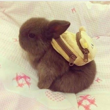 Bunny wearing a backpack.