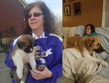 before and after pics show big puppy all grown up