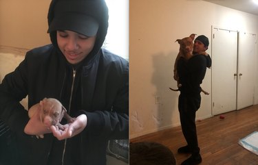 before and after pics show cuddly pitbull all grown up