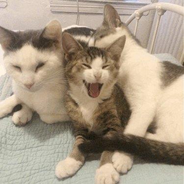 cat named Twilight Sparkle