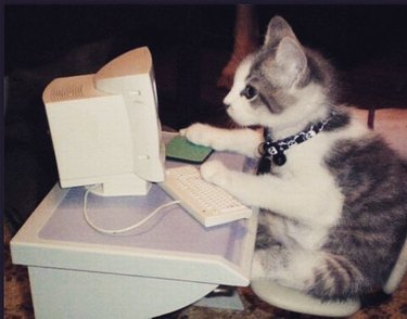 cat uses internet to search for funny cat names
