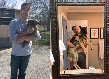 before and after pics show German shepherd puppy all grown up