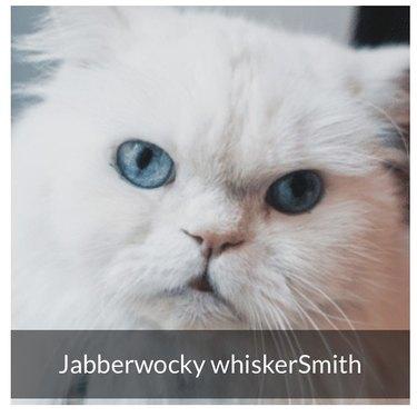 Cat named Jabberwocky WhiskerSmith