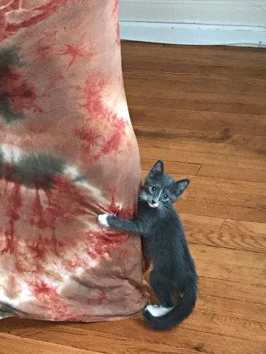 Needy kitten interrupts woman's fashion shoot with hilarious photobomb
