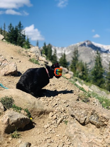 Cat on a mountain wearing goggles