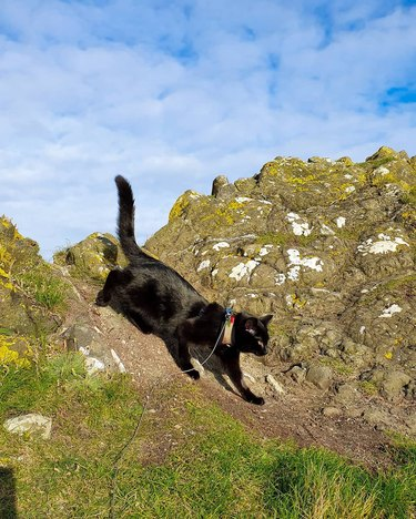 Cat prowling on a mountain