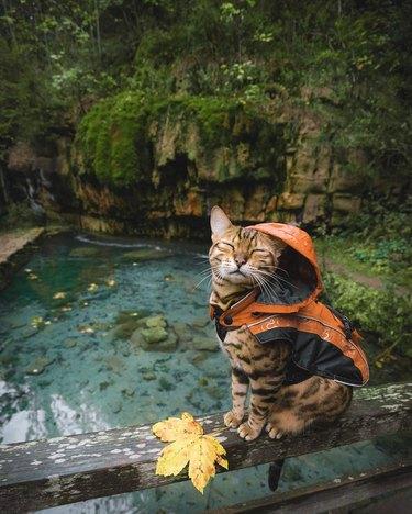 Cat in a raincoat
