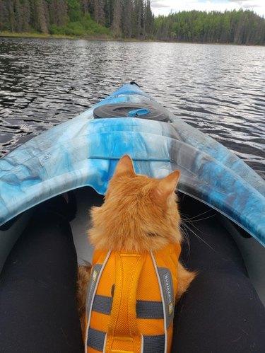 Cat sitting in a kayak