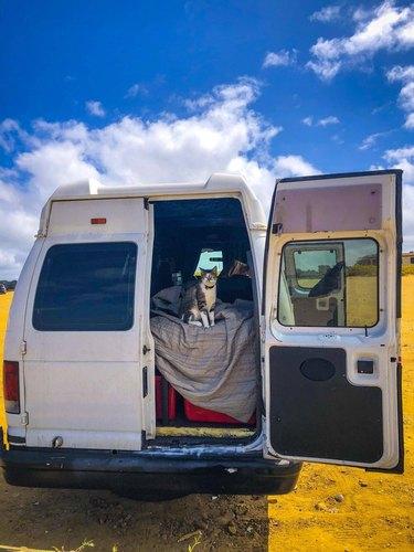 Cat in the back of a camper van.