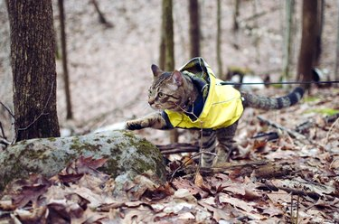 Cat in a forest with one paw outstretched