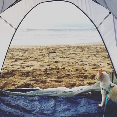Cat in a tent looking at the ocean