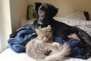 """Pet owners are sharing portraits of their cat & dog """"fur siblings"""" and it is too pure"""