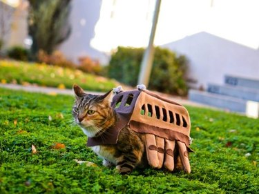 Cat dressed as the Catbus from My Neighbor Totoro