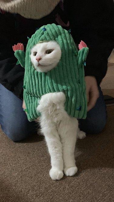 Cat dressed as cactus