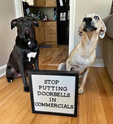 Dogs posing with sign that says Stop putting doorbells in commercials