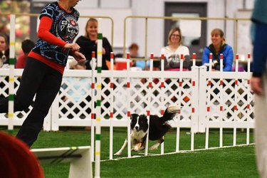 Agility dog reacting to highlight video is cuteness inception