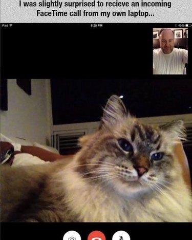 A cat FaceTiming his person