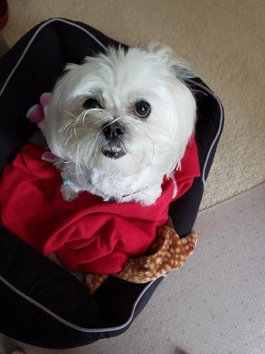 Cute dog in suitcase